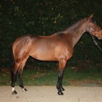 Example of photos taken at Wodehouse Stud which would then be featured in your horse's advert
