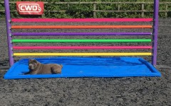 Our new jumps from Pb Equestrian, featuring Nancy (Sharpei x Chow Chow)