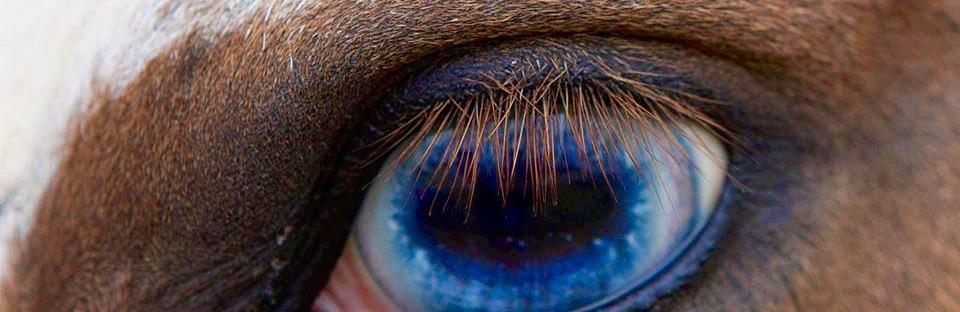 monnies-eye-1