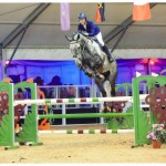 8yo Florida VDL owned by Wodehouse Stud