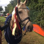 Latte with her winners rug and rosettes